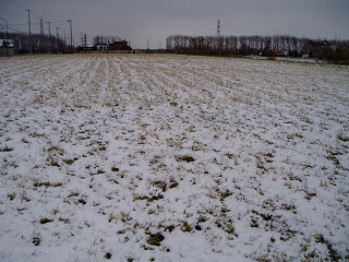 2006年11月23日うすっら積もる雪