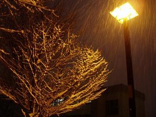 2007年1月29日降雪